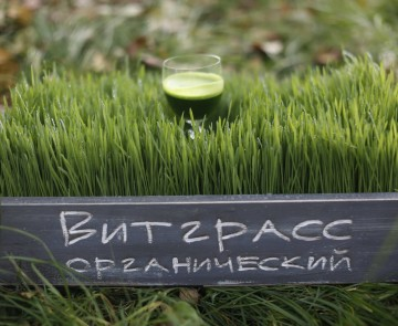 Sweetgrass — витграсс