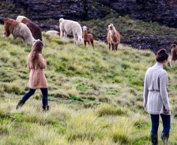 Abrazame — свитера из шерсти альпака и ламы