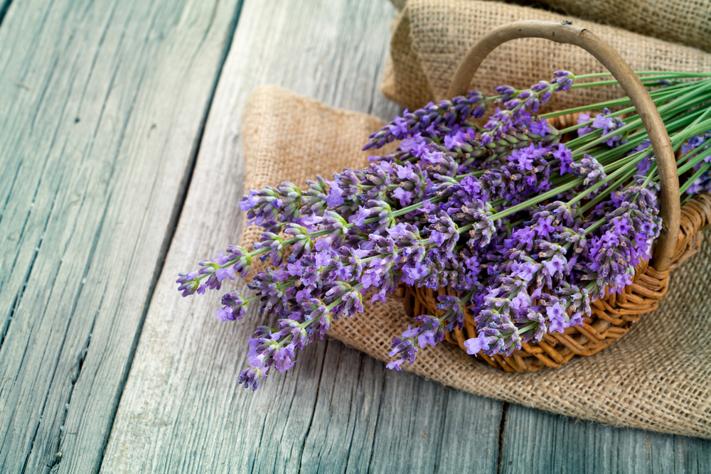 lavender flowers in a basket with burlap on the wooden background